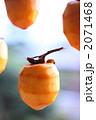 干し柿 干柿 渋柿の写真 2071468