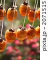 干し柿 干柿 渋柿の写真 2071515