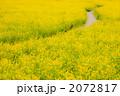 菜の花の小道 2072817