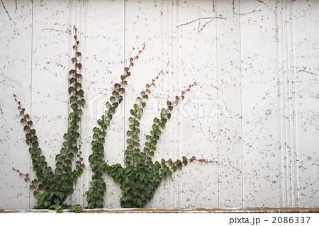 トタンの壁に這う植物 2086337