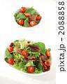 2皿のフレッシュグリーンサラダ 2088858