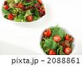 2皿のフレッシュグリーンサラダ 2088861