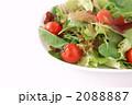 フレッシュグリーンサラダ 2088887
