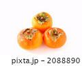 3個の柿 2088890