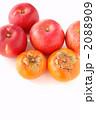 リンゴと柿 2088909