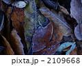 霜のついた落葉 2109668