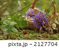 森のウサギ 2127704