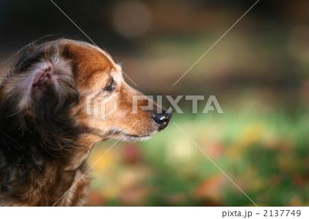 日の光を浴びる犬 2137749