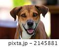 犬 2145881