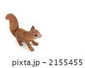 りす 栗鼠 台湾リスの写真 2155455