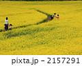 菜の花迷路 2157291