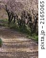 桜の花舞い散る小道 2165065