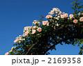 薔薇アーチ 2169358