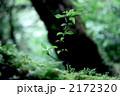 新しい命〜屋久島にて 2172320