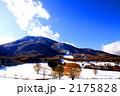 黒姫高原の雪の紅葉 2175828