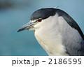 ゴイサギ サギ 鳥類の写真 2186595