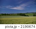 麦畑 丘 青空の写真 2190674