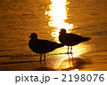 波打ち際の2羽のカモメ 2198076