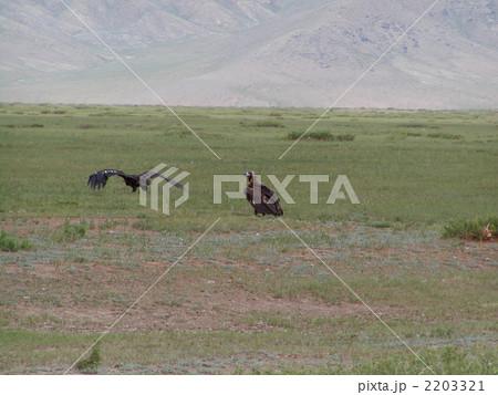 モンゴル国草原のハゲワシ 2203321