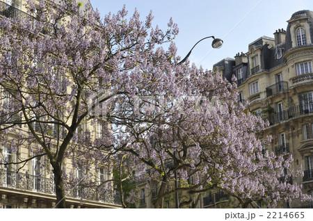 パリの桐並木の花 2214665