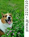 ミゾソバの花と笑う 2217310