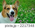 ミゾソバの花と笑う 2217348