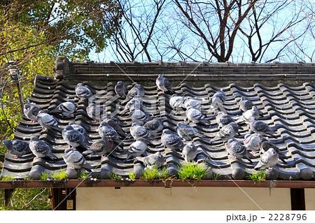 屋根の上の鳩 2228796