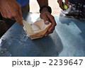 ココナッツ ヤシの実 フルーツの写真 2239647