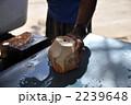ココナッツ ヤシの実 フルーツの写真 2239648