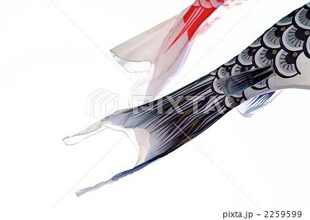 鯉のぼりの尾っぽ 2259599