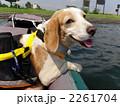 カヌーに乗るビーグル(レモンカラー) 2261704