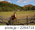 家畜 サラブレッド 競走馬の写真 2264718