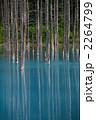 カラマツ 青い池 立ち枯れの木の写真 2264799
