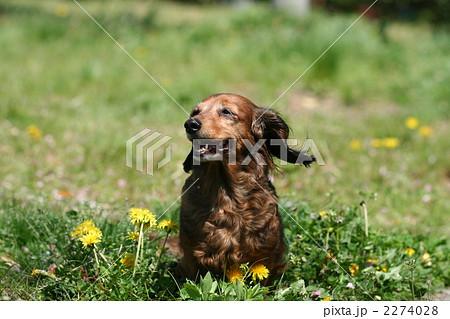 春の公園の犬 2274028