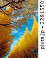 神宮外苑 銀杏並木 2281550