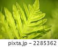 シダ 植物 葉の写真 2285362