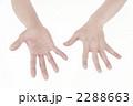両手 ボディパーツ 指の写真 2288663