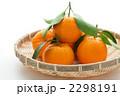 椪柑 凸柑 ポンカンの写真 2298191
