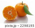 凸柑 ポンカン ぽんかんの写真 2298193