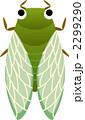 ミンミンゼミ せみ 虫のイラスト 2299290