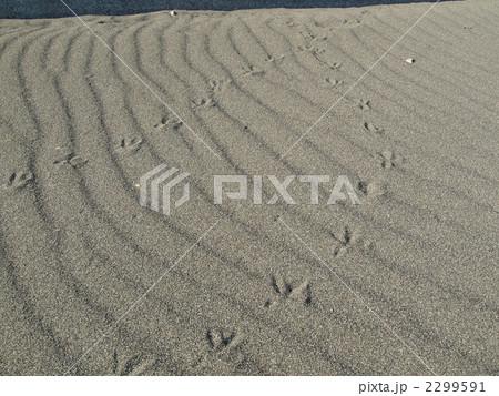 海岸・足跡 2299591