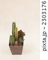 サボテンの寄せ植え 2303176