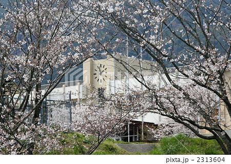 桜と校舎 2313604