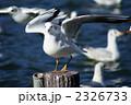 鳥 野鳥 カモメの写真 2326733