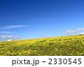 野原 花畑 花の写真 2330545