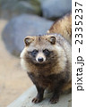 タヌキ 狸 動物の写真 2335237