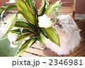 カサブランカと猫 2346981
