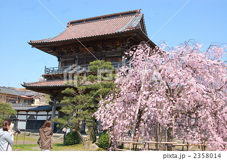 新潟県新発田市 宝光寺の桜の写...