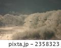 タンチョウ 鶴 霧氷の写真 2358323