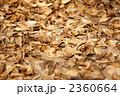 枯れ葉 植物 落ち葉の写真 2360664